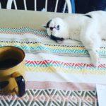 Moonshine James Samurai Kitten