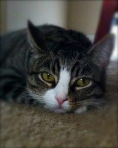 """Kitty Meow Meows (""""Kitty Girl"""")"""