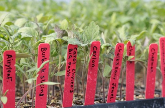 Farmstand meets food trucks meets tomatoes: Kendall Jackson