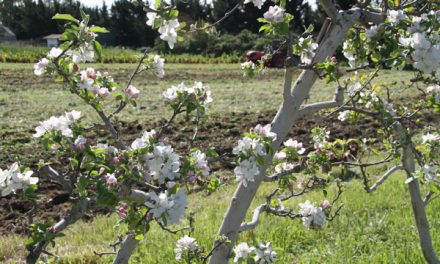 Summerfield Waldorf School & Farm | Santa Rosa