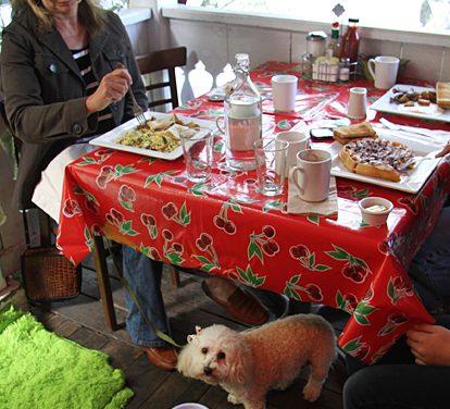 Dog-Friendly Sonoma County Restaurants