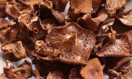 Mushrooms Gone Wild: Mushroom Foraging Bay Area Weekend