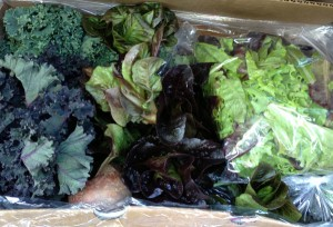 A Crop Mobbed box
