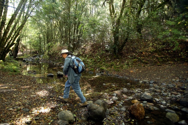 Bill Tonkin walks along Santa Rosa Creek in Hood Mountain Regional Park, near Santa Rosa on Tuesday, October 1, 2013. (Christopher Chung/ The Press Democrat)