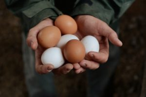 ason Gooch with an assortment of freshly laid eggs at Wyland Orchards his family owned and operated pastured egg ranch in Petaluma, California. November 14, 2013. (Photoby Erik Castro)