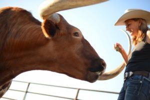 Kristine Beck feeding Rocky an 8-year-old Longhorn at Twisted Horn Ranch in Bloomfield, California. November 12, 2013.  (Photo: Erik Castro/for The Press Democrat)