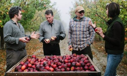 Devoto family pleads for land to plant heirloom apples