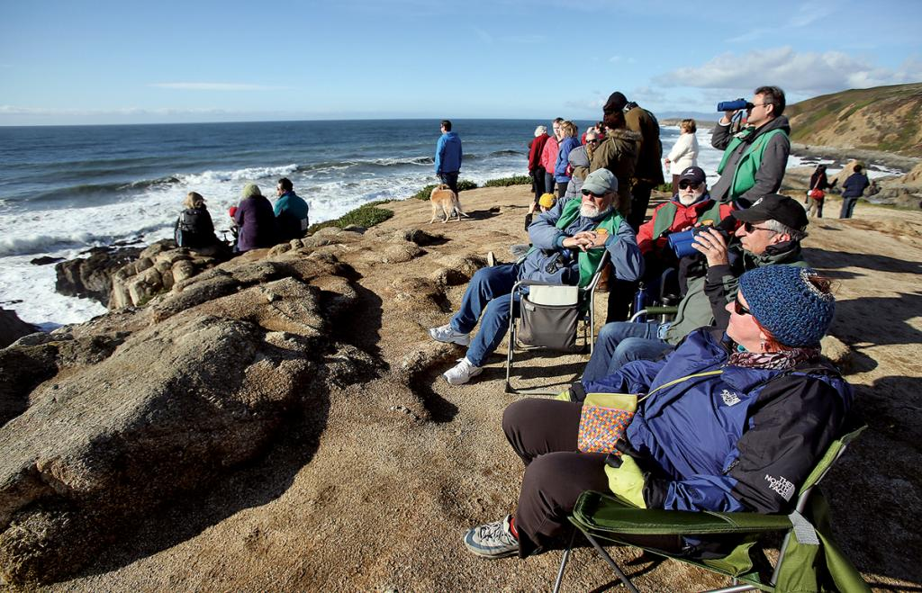 Louella Pizzuti, right, scans the horizon for migrating whales with Whale Watch volunteers Rod Palmieri, Jeremy Nichols and Larry Tiller at Bodega Head. (Christopher Chung/ The Press Democrat, file 2013)