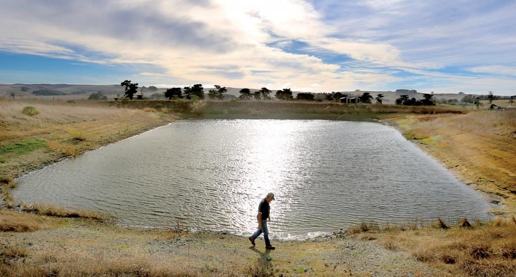 """I drove my ranch today, and it is a disaster."" - Two Rock dairyman Don De Bernardi, whose shrinking irrigation pond should be filing with winter rain."