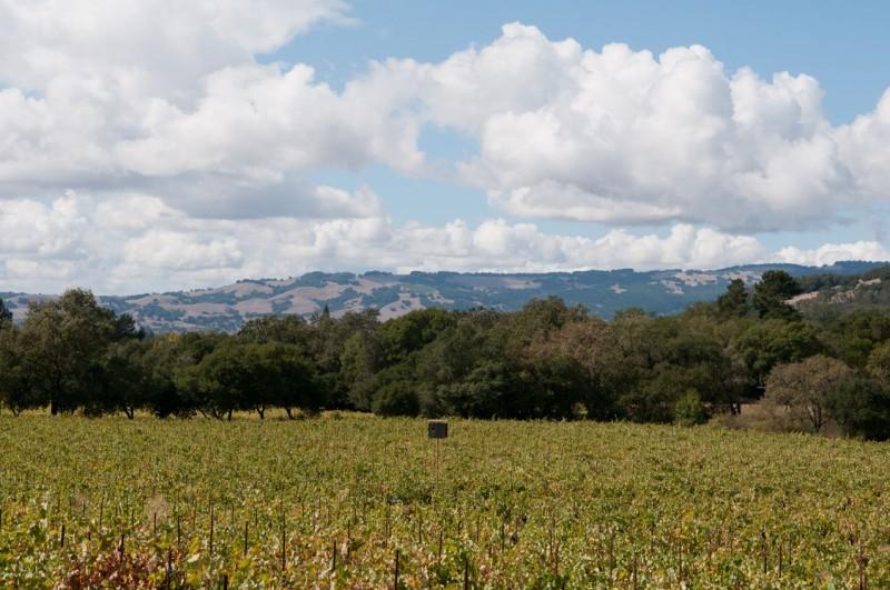 Hillside and vineyard at Bartholomew Park.
