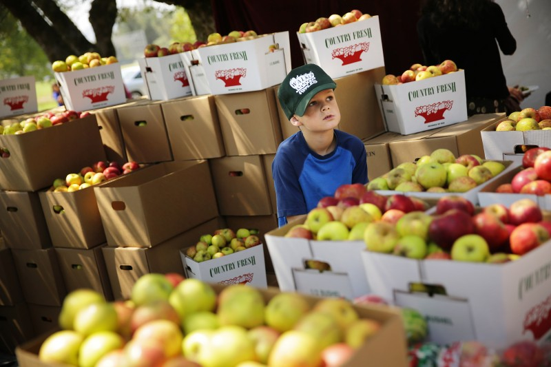 Austin Beckman, 8, helps his family sell their apple from Walker Apple Farm during the Gravenstein Apple Fair in Sebastopol on Saturday, August 8, 2014. (Conner Ja