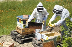 Kathleen is teaching Hailey about beekeeping as a way to increase the productivity of their garden.