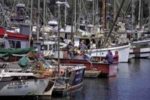 Fishermen in Bodega Bay prepare their boats in April in anticipation of the opening of the 2014 commercial salmon season.