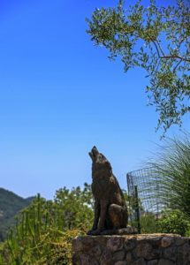 Coyote bronze statue in the backyard.