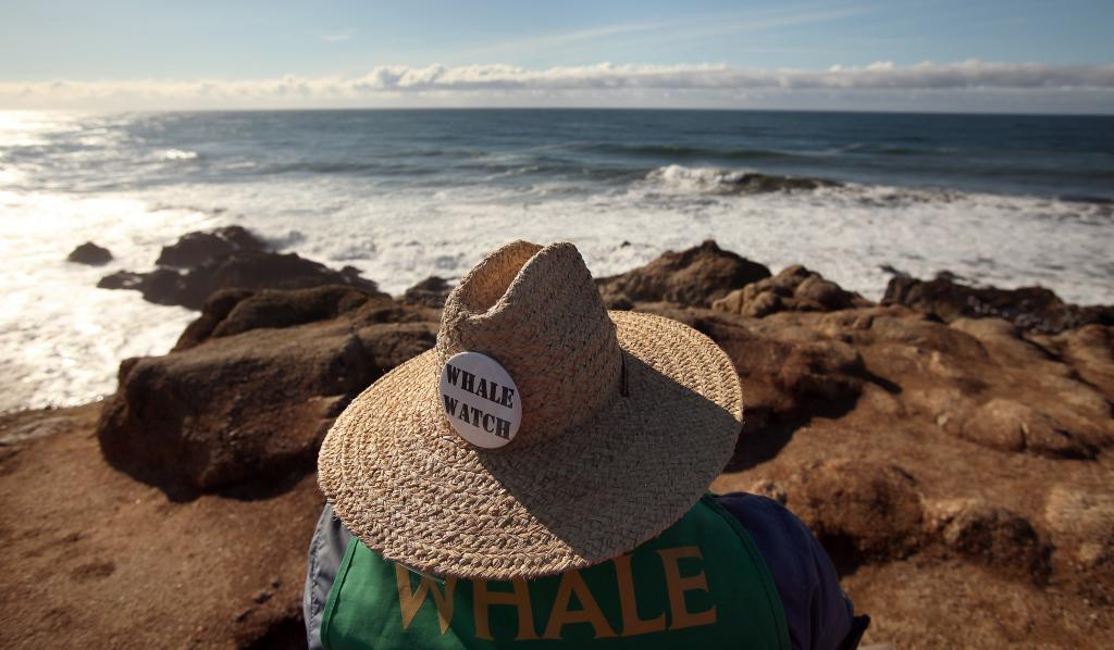 Whale Watch volunteer Larry Tiller, of Healdsburg, watches the horizon for spouts from Bodega Head. (photo by Christopher Chung)
