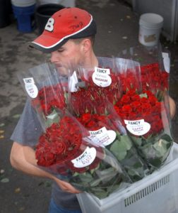 Nick Neve hauls a bucket of roses to his truck for delivery in Marin County from Neve Brothers, the family's rose nursery in Petaluma, as they prepare for the Valentines Day rose-buying frenzy. (Photo by Mark Aronoff, file 2011)