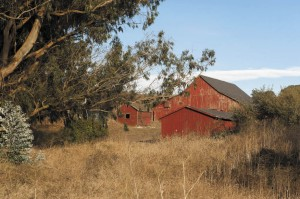 The large, red hay barn is part of the rustic beauty of the Straus property, which is still a working ranch.