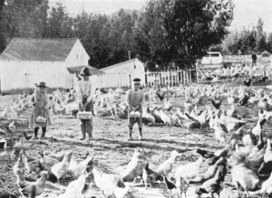Young egg gatherers at Armstrong's Spring Hill Poultry Farm, 1897.