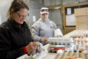 Fresh eggs get washed by hand and packed in recycled cartons at Tara Firma Farms in Petaluma. (photo by Beth Schlanker)