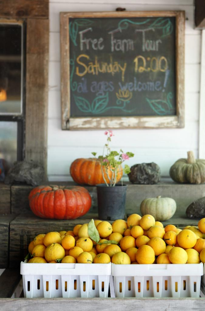Green String Farm offers free tours every Saturday, but visitors are welcome to stop by anytime.
