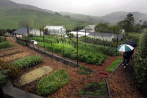 In fair weather or rain, visitors can tour the McEvoy gardens by appointment, enjoying the lush coastal hills west of Petaluma. (photo by John Burgess)