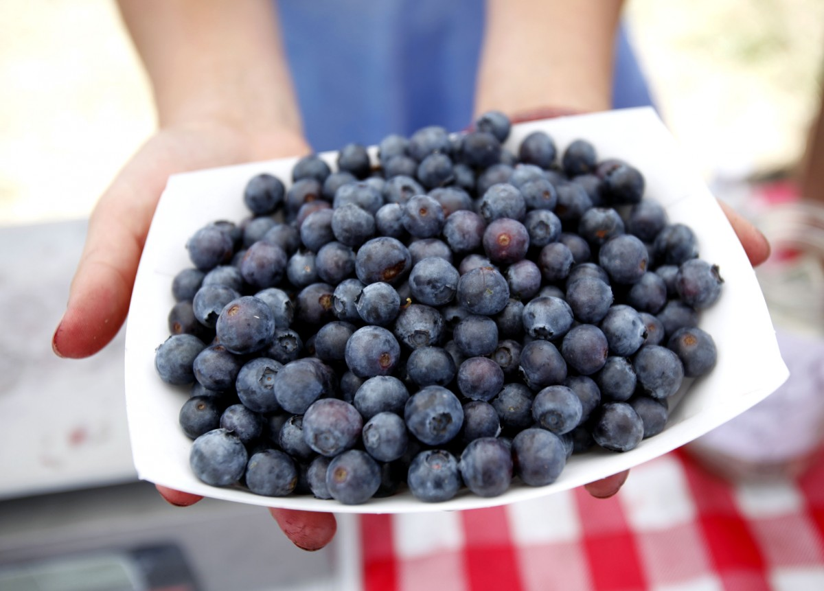 Fresh picked blueberries at the Sonoma Swamp Blues farm stand. Crista Jeremiason