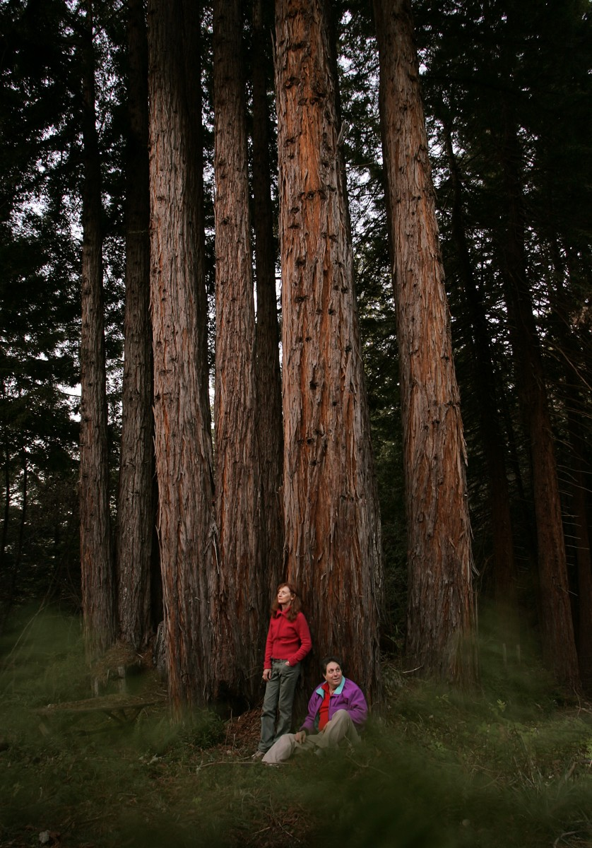 Grove of Old Trees, Occidental. (Photo by John Burgess)