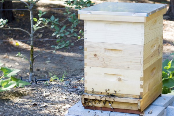 Bee box at Harvest Table in St. Helena. Photo: ©Heather Irwin