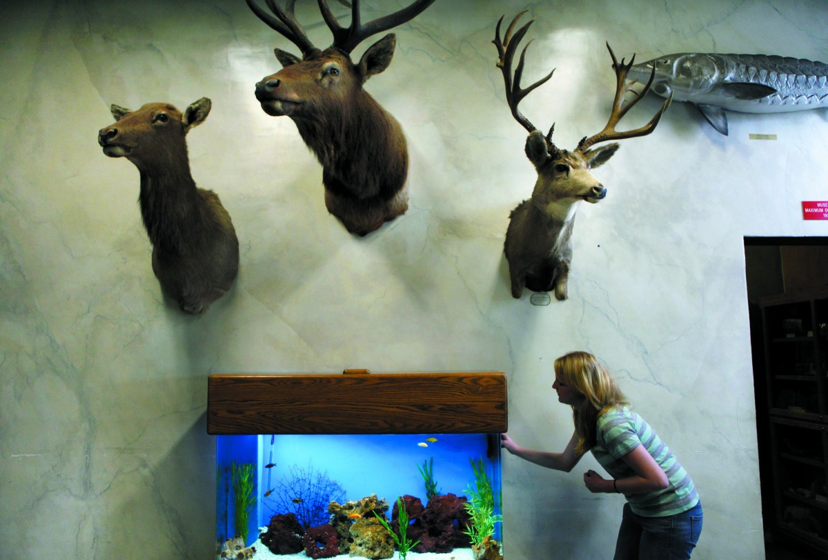 Petaluma Wildlife Museum. (Photo by Beth Schlanker)