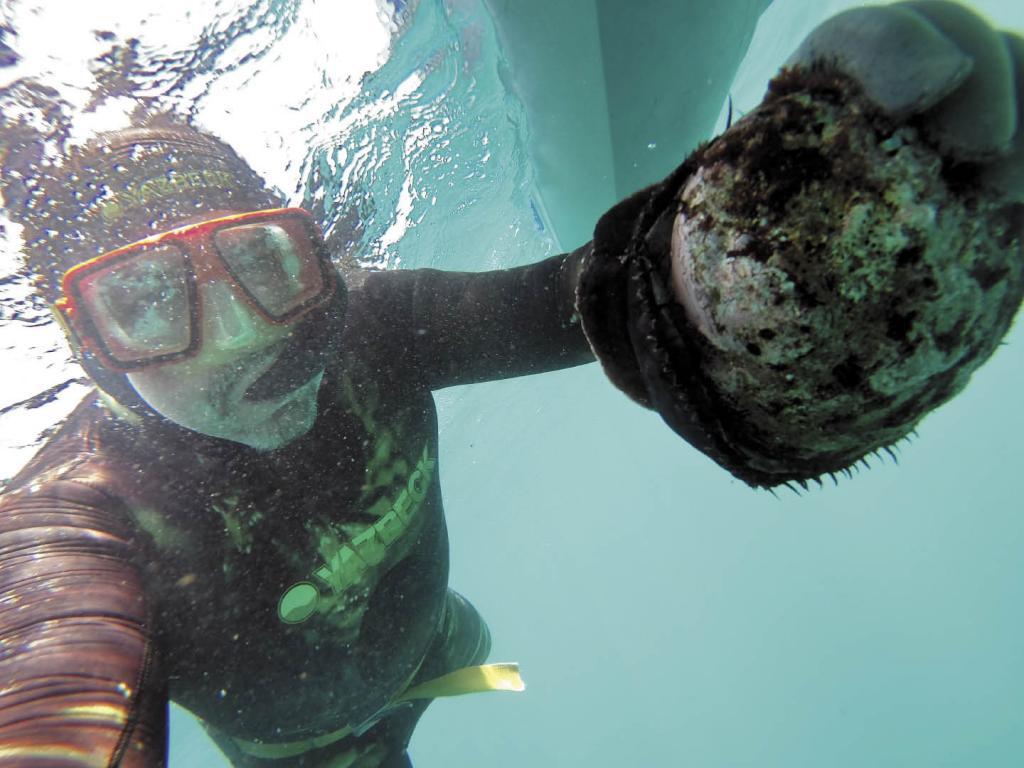 Brian Balbas shows off an abalone at Van Damme.