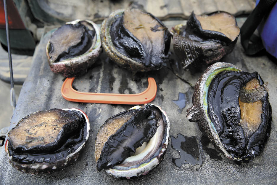 Abalone seized in May by game wardens at Van Damme State Park included two undersized shellfish. One diver involved was in possession of six abalone, double the legal limit.
