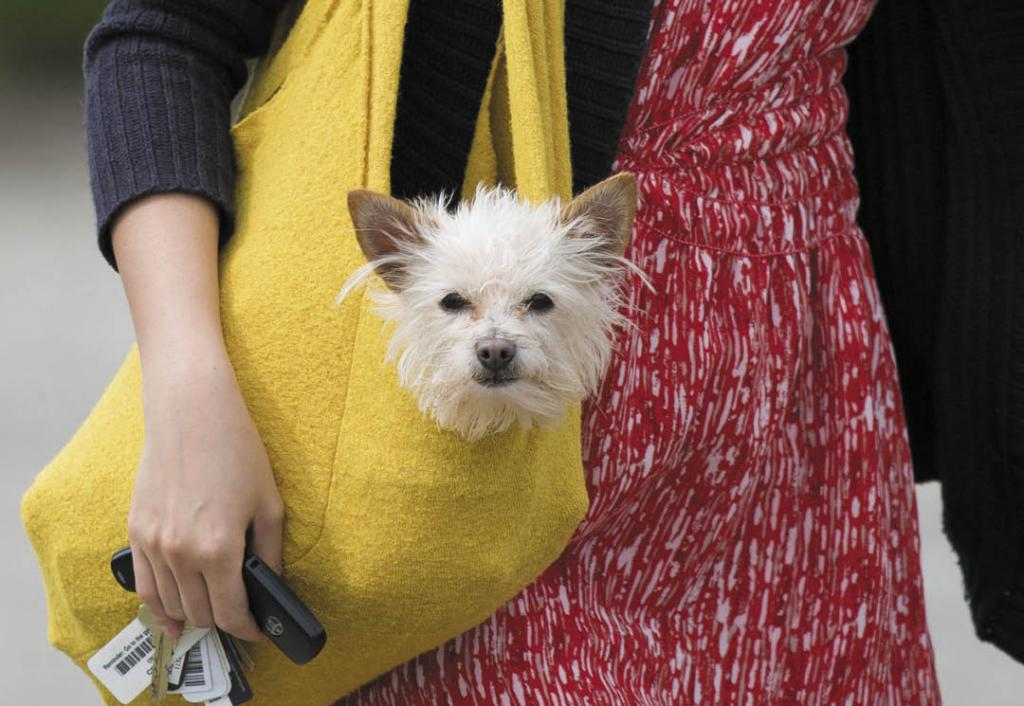 Pooches can ride along to many winery, hotel and restaurant venues in Sonoma's Wine Country, where they are made as welcome as their humans. (Photo by Jeremy Portje)