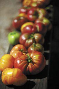 Harvestomatos102_opt