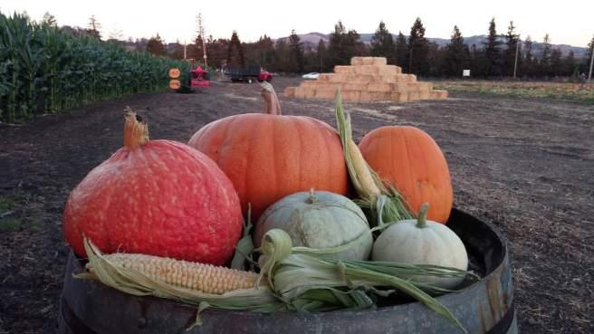 Eastside Pumpkin Patch. (Courtesy / Eastside Seasonal Farm)