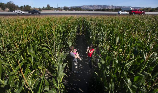 Chris Pugmire and step-daughter Alyce Pugmire in the corn maze at the Petaluma Pumpkin Patch and Amazing Corn Maze, Saturday Oct. 27 2012. (Kent Porter / The Press Democrat)