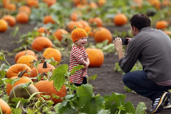 The Petaluma Pumpkin Patch and Amazing Corn Maze in Petaluma. (John Burgess / The Press Democrat)