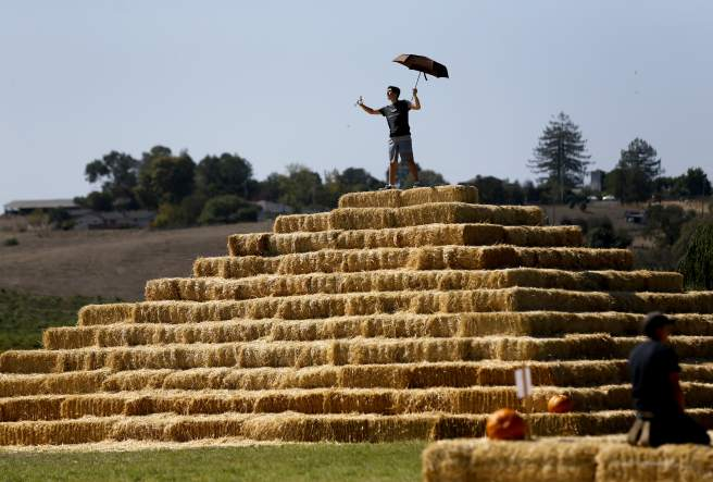 Sam Aerneson, 14, climbs atop a pyramid of hay bales at the Santa Rosa Pumpkin Patch in Santa Rosa, on Monday, October 5, 2015. (Beth Schlanker / The Press Democrat)