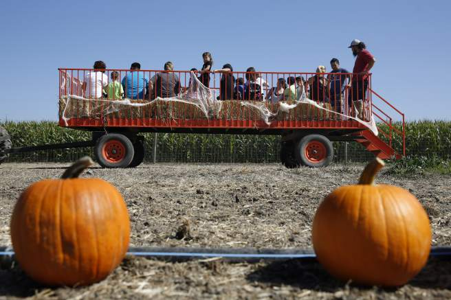 A hayride passes by a pumpkin patch at the Santa Rosa Pumpkin Patch in Santa Rosa, on Monday, Oct. 5, 2015. (Beth Schlanker / The Press Democrat)
