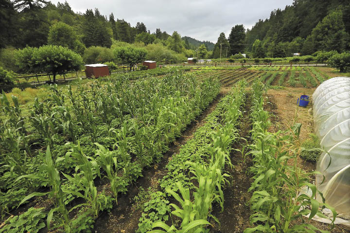 From leafy lettuces to corn to garlic, there's a cornucopia of fresh produce growing at Jorge Saldana's farm.