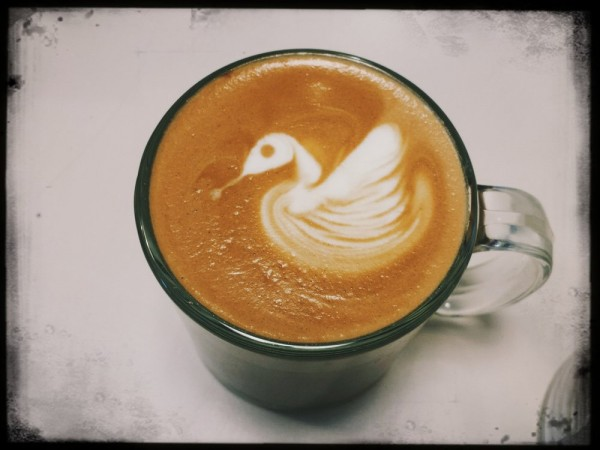 A beautiful swan at Bella Rosa coffee A beautiful swan at Bella Rosa coffee