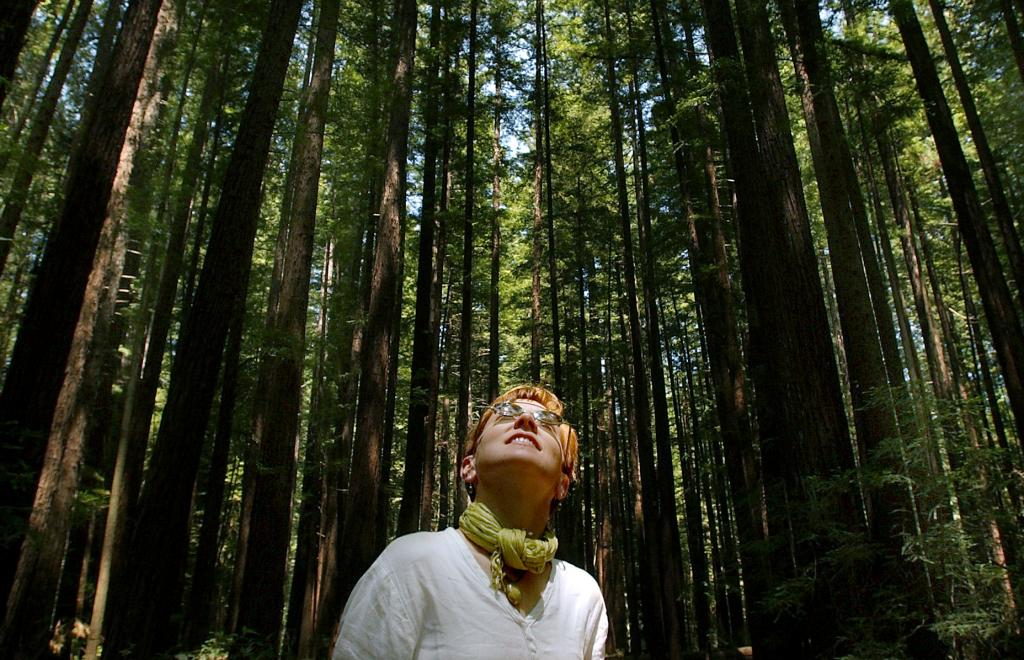 Skip Muir Woods, this is where the locals go to enjoy the redwoods. Walk among centuries old redwoods at Armstrong Woods State Park near Guerneville. (Kent Porter / The Press Democrat) 6/12/2003: D1: At Armstrong Woods State Park near Guerneville, Minnesota resident Jane Fisher cools off beneath the shade of towering redwoods where it was 68 degrees.