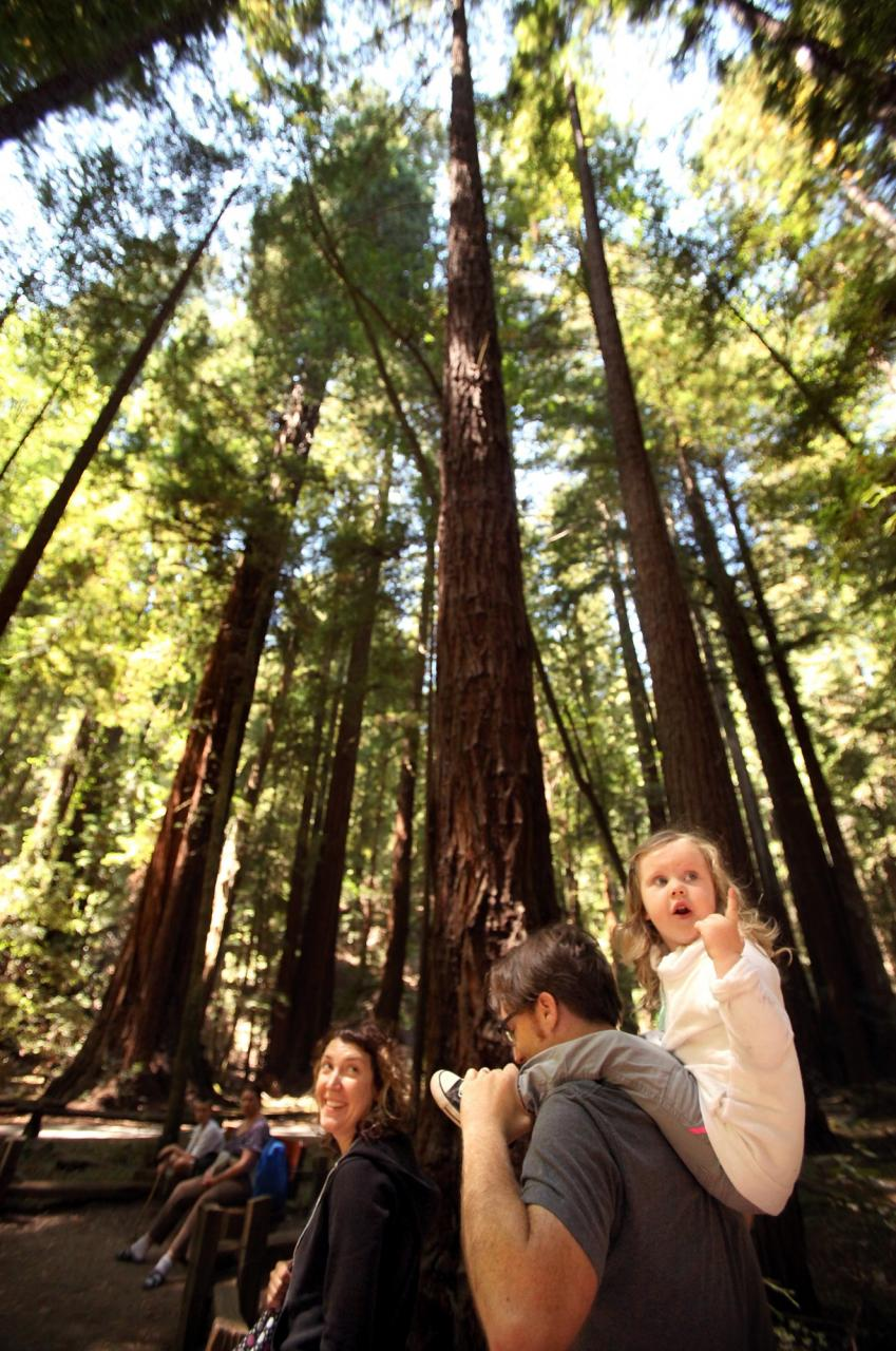 Alice Connor, 2, enjoys the view of the redwoods while riding on her father Michan's shoulders on a hike with her mother, Heather, at Armstrong Redwoods State Natural Reserve, in Guerneville, on Tuesday, August 13, 2013. (Christopher Chung/ The Press Democrat)