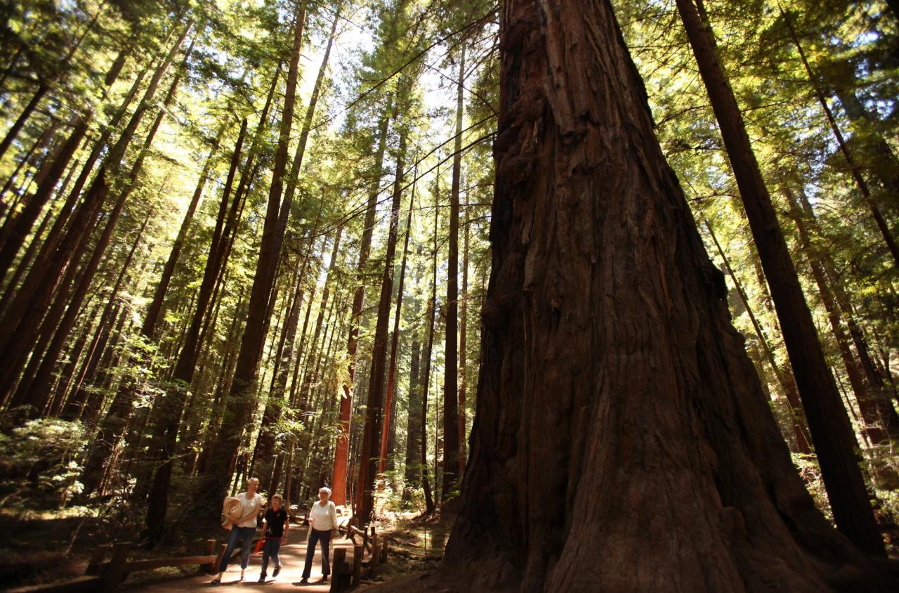 Stephanie Holmes, left, Emmett Hanlon and Judy Holmes walk along a trail in Armstrong Redwoods State Natural Reserve, in Guerneville, on Tuesday, August 13, 2013. (Christopher Chung/ The Press Democrat)