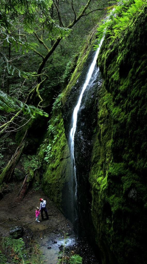 Chamberlain Falls: Set in the Jackson Demonstration State Forest, the falls drop 50 feet in a slim white pencil of water. It's a relaxed, quarter-mile walk to the base of the falls set in a magical grotto -- all tucked within a stand of old-growth redwoods. Look for the white, three-leafed trillium amid the ferns in spring. The falls can be found off Highway 20 halfway between Willits and Fort Bragg. (John Burgess / Press Democrat)