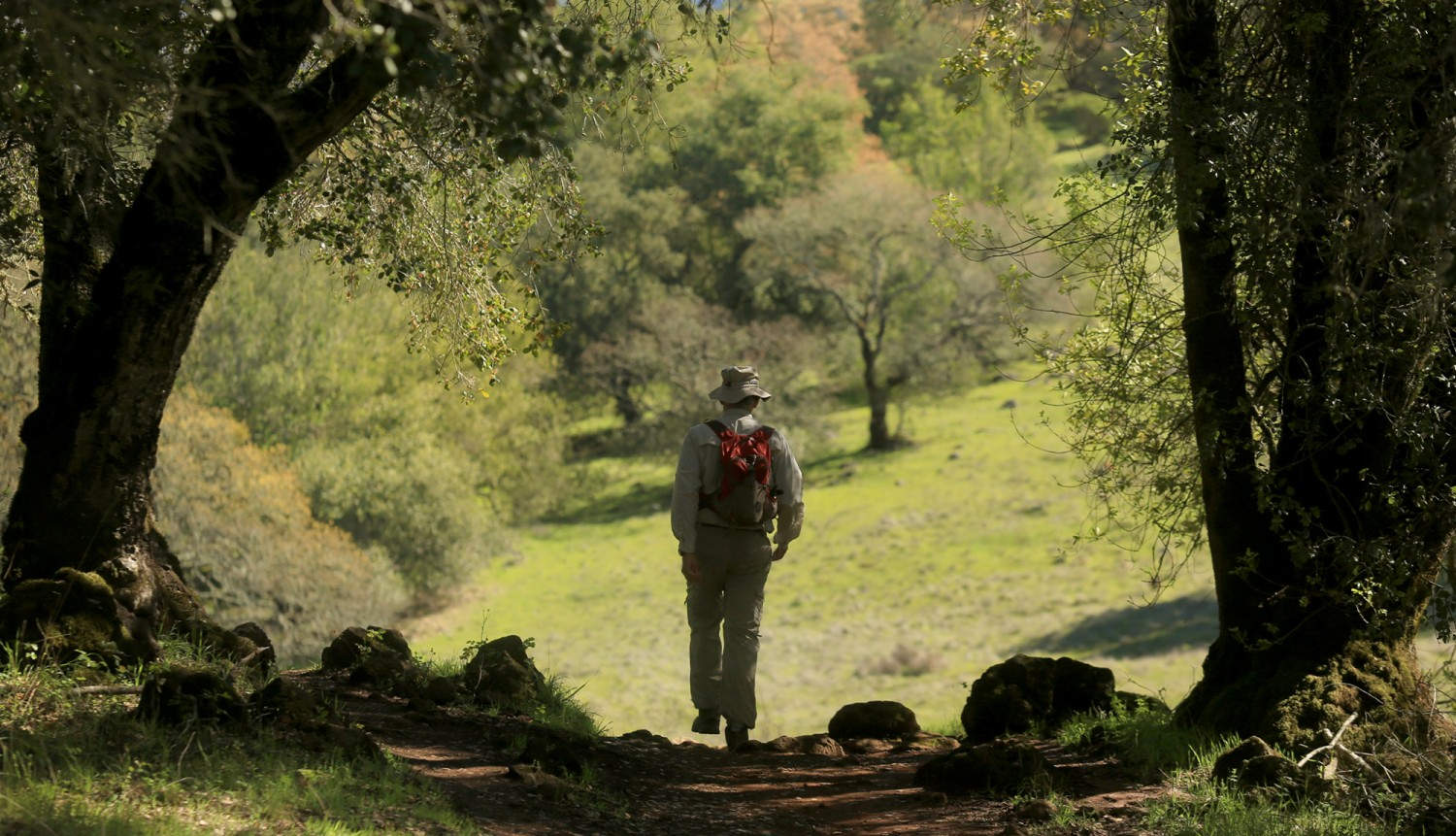 Phil Weil hikes Annadel State Park in search of early wildflower blooms, in Santa Rosa, Monday Feb. 22, 2016. (Kent Porter / Press Democrat)