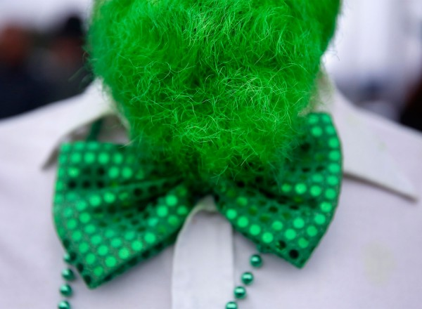 Pat Davis died his beard green for the St. Patrick's Day parade in Healdsburg, on Tuesday, March 17, 2015. (BETH SCHLANKER/ The Press Democrat)