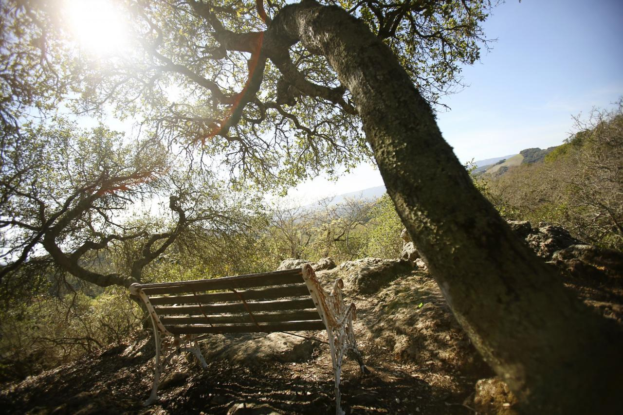 A bench provides rest for hikers and spectacular views of Sonoma from an overlook along the Bartholomew Memorial Park loop. (Conner Jay/The Press Democrat)