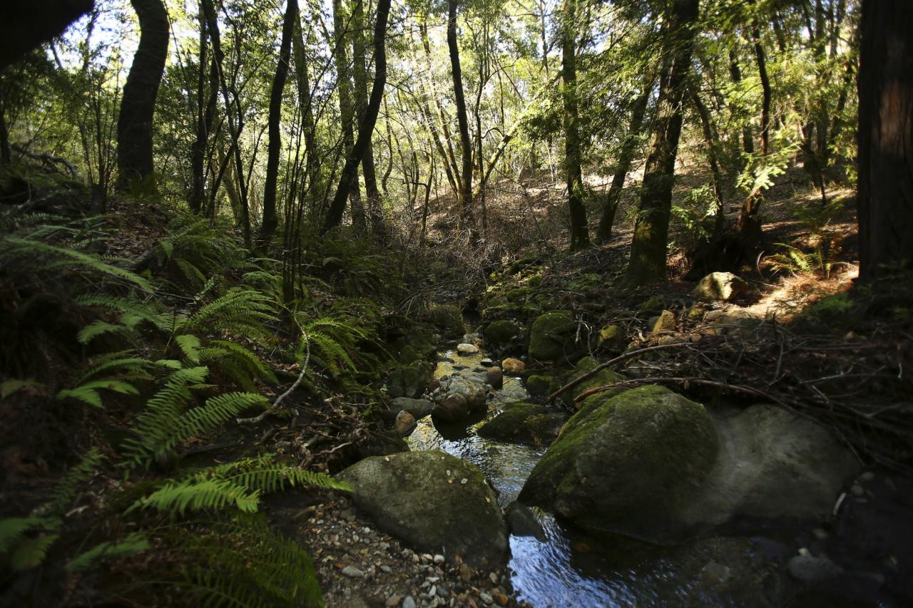 Small creeks run along the trials in Bartholomew Memorial Park near the heart of Sonoma. (Conner Jay/The Press Democrat)