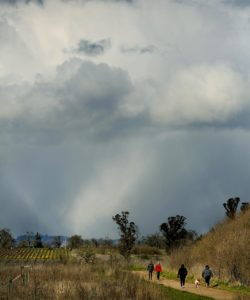 A hail shaft advances on hikers taking an afternoon walk at the Laguna de Santa Rosa Trail in Sebastopol. (Kent Porter / Press Democrat)