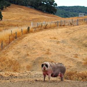 Tara Firma Farms in Petaluma (Facebook)